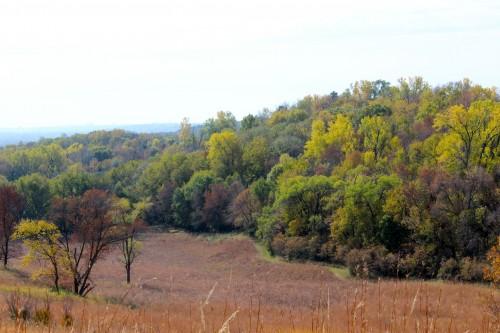 Neale Woods Tree Tops